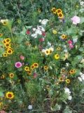 Wildflowers coloridos por el borde de la carretera Imagenes de archivo
