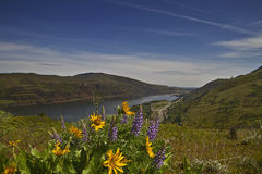 Wildflowers in Columbia River Gorge 3 Stock Images