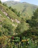 Wildflowers con le montagne arrotondate ripide Fotografia Stock