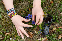Wildflowers conmovedores de la mano femenina en el área suburbana fotografía de archivo