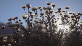 Wildflowers contra The Sun fotos de archivo libres de regalías