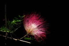 Wildflowers cor-de-rosa Imagens de Stock