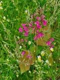 Wildflowers cor-de-rosa e brancos pequenos com folhas em um fundo da grama verde Fotografia de Stock Royalty Free