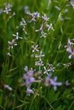 Wildflowers - cuatro-hoja, p?rpura y blanco en el borde foto de archivo