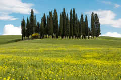 Wildflowers and cypress trees in Tuscany Royalty Free Stock Photo