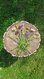 Wildflowers d'été sur le fond en bois Un beau bouquet d'été sur un fond en bois Camomille, ail sauvage, Veronica long photos stock