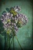 Wildflowers d'allium d'ail sauvage de lavande avec des textures grunges Photo stock
