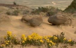 Wildflowers d'or jaunes de bannière dans des formations rondes de Sandrock photos stock