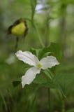 Wildflowers da mola fotografia de stock