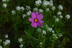 Wildflowers da mola nos prados Fotografia de Stock