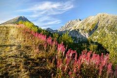Wildflowers da montanha Imagens de Stock