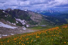 Wildflowers dans l'arête de Terektinskiy photos libres de droits