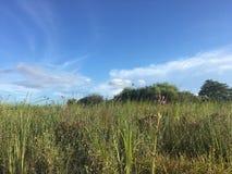 Wildflowers dans la région naturelle de clairières de pin dans des marais de la Floride photo libre de droits