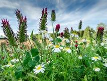 Wildflowers dans la République Tchèque Photographie stock