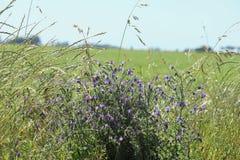 Wildflowers dans le domaine Photo libre de droits