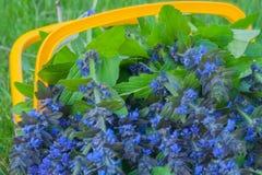 Wildflowers dans un panier image libre de droits