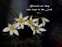 Blessed are they who hope in the Lord - Psalm 1. Wildflowers on a dark background with the bible verse: Blessed are they who hope in the Lord.- Psalm 1 stock photos