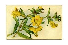 Wildflowers de California Foto de archivo libre de regalías