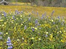 Wildflowers de California Fotografía de archivo libre de regalías