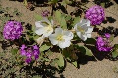 Wildflowers de Caterpillar y del desierto Imagen de archivo libre de regalías