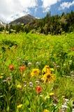 Wildflowers de Colorado e montanhas snow-capped Fotos de Stock Royalty Free