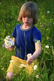 Wildflowers de cueillette d'enfant Photos stock