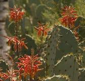 Wildflowers de désert Photographie stock libre de droits