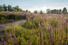 Wildflowers de floraison dans rétro-éclairé Photographie stock