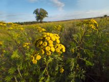 Wildflowers de floraison pendant le jour d'automne Image libre de droits