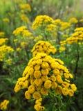 Wildflowers de floraison pendant le jour d'automne Image stock
