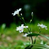 Wildflowers de florescência foto de stock
