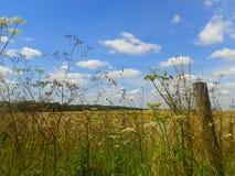 Wildflowers de Kent Fotos de Stock