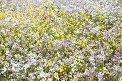 Wildflowers de la Californie en fleur Photo stock