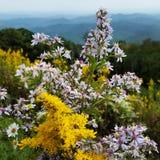 Wildflowers de la cosecha Fotografía de archivo