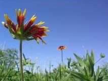 Wildflowers de la flor combinada Fotos de archivo libres de regalías