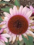 Wildflowers de la lavanda fotos de archivo libres de regalías