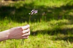 Wildflowers de la lavanda Imagen de archivo libre de regalías
