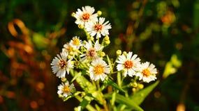 Wildflowers de la mañana imágenes de archivo libres de regalías