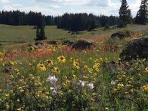 Wildflowers de la montaña Imágenes de archivo libres de regalías