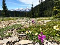 Wildflowers de la montaña Fotografía de archivo libre de regalías