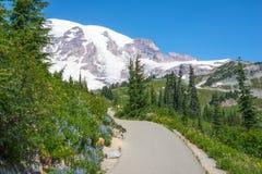 Wildflowers de la nieve de la pista de senderismo de la montaña foto de archivo