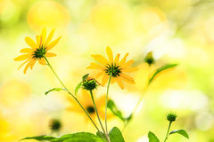 Wildflowers de la pradera Fotos de archivo libres de regalías