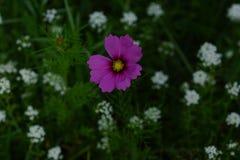 Wildflowers de la primavera en prados imágenes de archivo libres de regalías