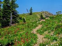 Wildflowers de montagne de lac Image stock