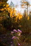 Wildflowers de New México en la puesta del sol fotos de archivo