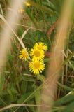 Wildflowers de Primorye imagen de archivo