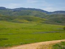 Wildflowers de ressort sur des collines de montagne photo stock