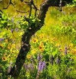 Wildflowers in de de Rivierkloof van Colombia royalty-vrije stock foto