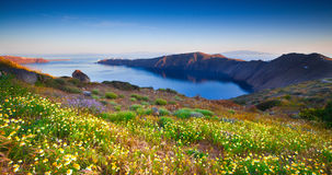 Wildflowers de Santorini foto de stock