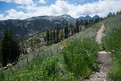 Wildflowers in de Siërra Nevada Mountains Stock Foto